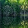御射鹿池(みしゃかいけ)の四季 動画制作レポート!長野県茅野の絶景地