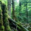 長野県佐久穂町にある白駒の池と苔の森の動画制作レポート!癒される自然美